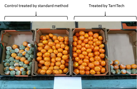 Fruit treated by Tarritech technology